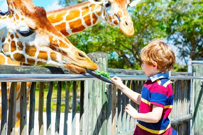 10 atrações para crianças em Miami