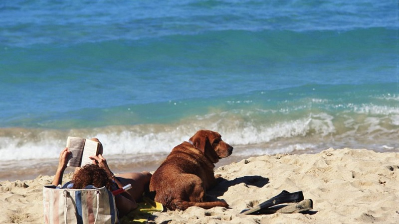 Praia de Key Biscayne para levar o cachorro em Miami