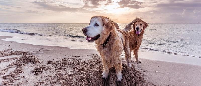 Praia Hobie Island Beach Park para levar o cachorro em Miami