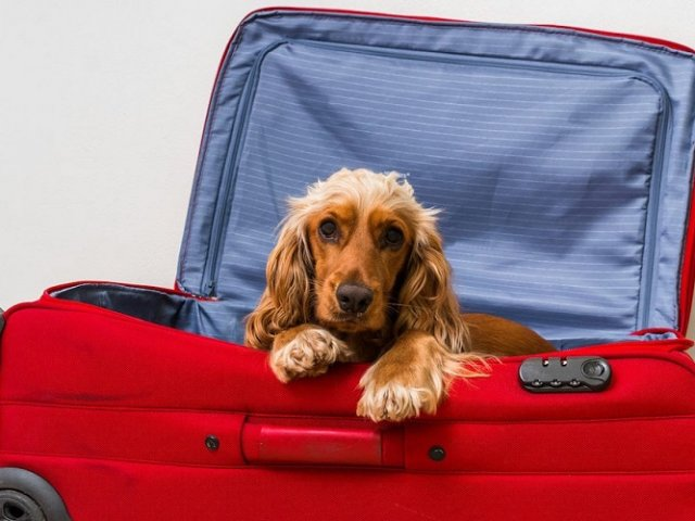Praias para levar o cachorro em Miami