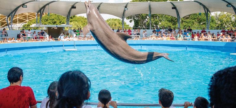 Golfinho no Miami Seaquarium em Miami