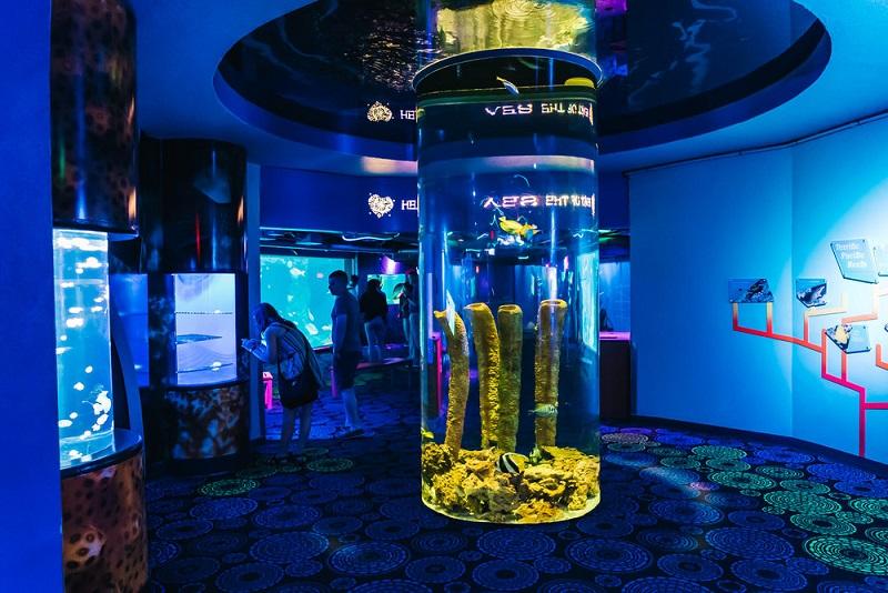 Tour pelo Florida Aquarium em Tampa