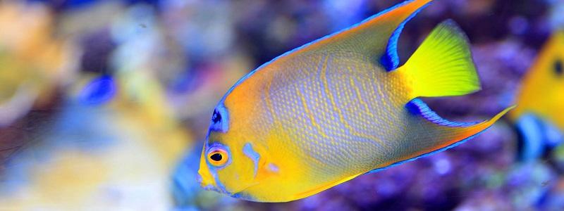 Peixe no Florida Aquarium em Tampa