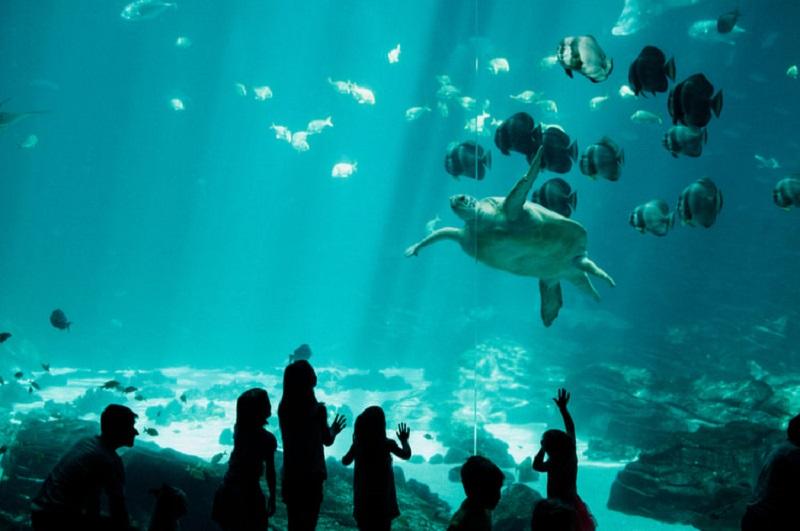 Crianças no Florida Aquarium em Tampa