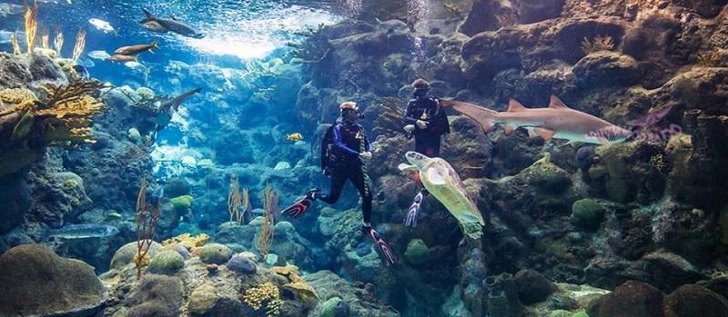 Diving With Sharks Experience no Florida Aquarium em Tampa